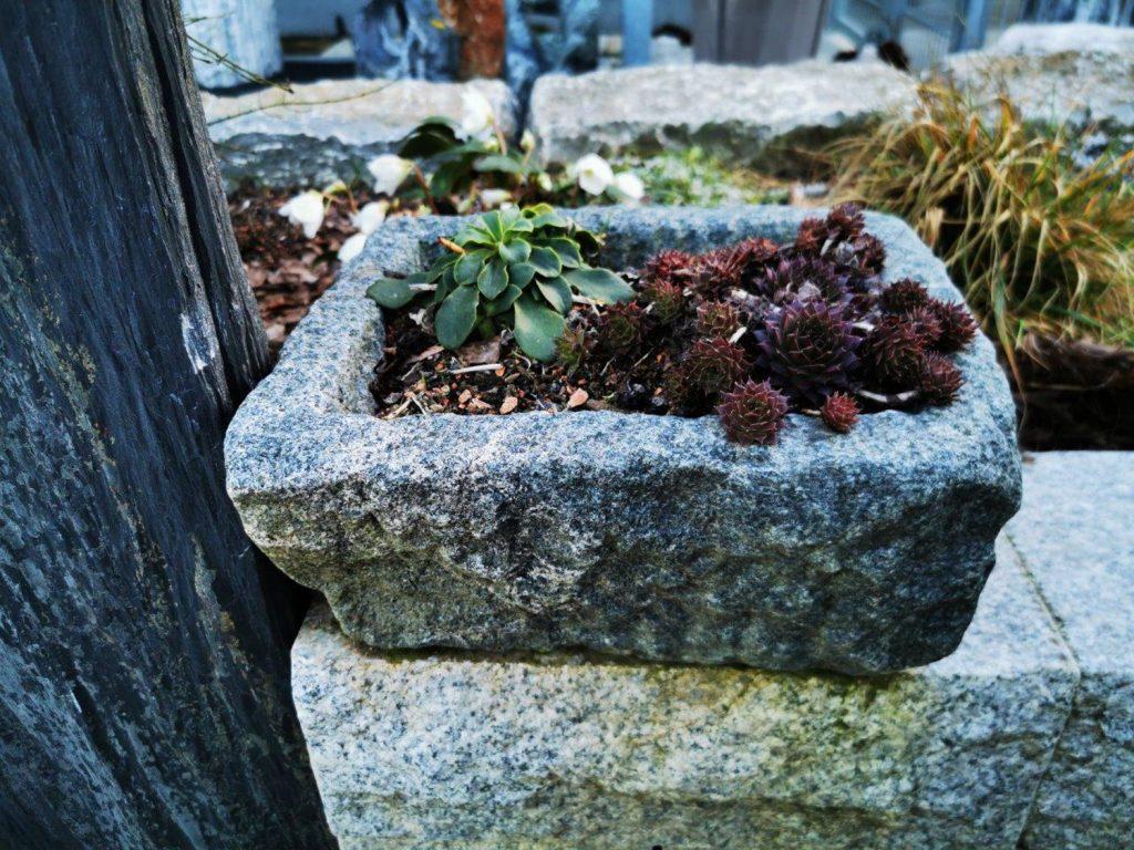 Antiker Trog Bepflanzt